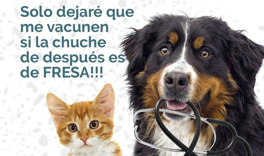 http://www.mokaimascotas.es/wp-content/uploads/2020/01/IG02-1080x640.jpg