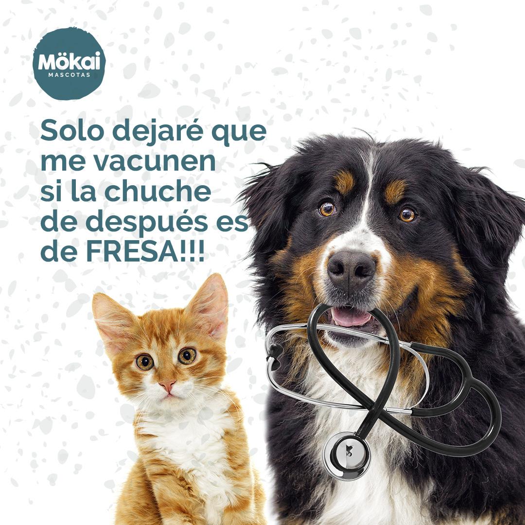 https://www.mokaimascotas.es/wp-content/uploads/2020/01/IG02.jpg