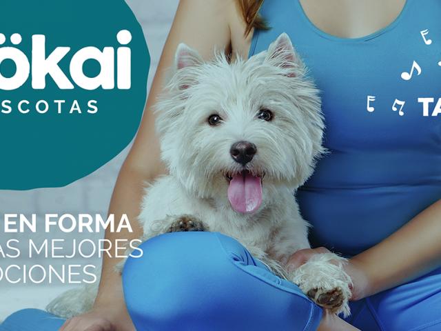 https://www.mokaimascotas.es/wp-content/uploads/2020/04/FOLLETO-MOKAI-MAYO-1-640x480.png