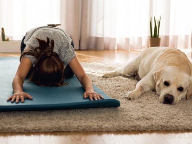 https://www.mokaimascotas.es/wp-content/uploads/2020/04/dog-yoga-1024x576-1-640x480.jpg