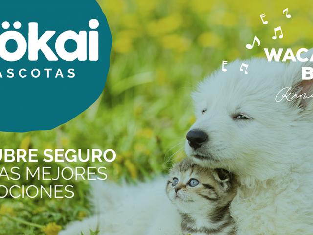 https://www.mokaimascotas.es/wp-content/uploads/2020/05/PORTADA-JUNIO-2020-copia-640x480.png