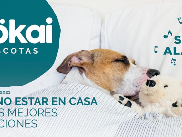 https://www.mokaimascotas.es/wp-content/uploads/2021/01/Folleto-MOKAI-FEBRERO-MARZO-1-640x480.png