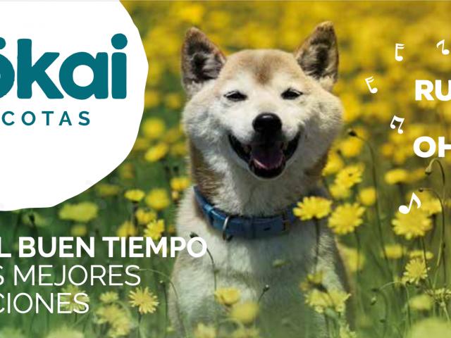 https://www.mokaimascotas.es/wp-content/uploads/2021/03/Captura-de-pantalla-2021-03-31-a-las-20.18.09-640x480.png