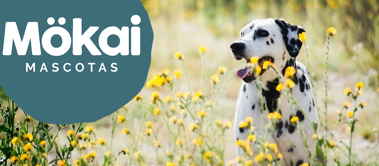 https://www.mokaimascotas.es/wp-content/uploads/2021/04/Dalmatians-dog-wildflowers_1680x1050.png